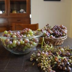 grapes processing