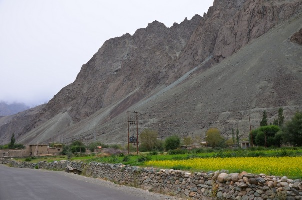 Mustard fields near Kargil