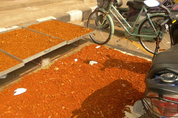 Sundrying turmeric to make kumkum, in Chennai