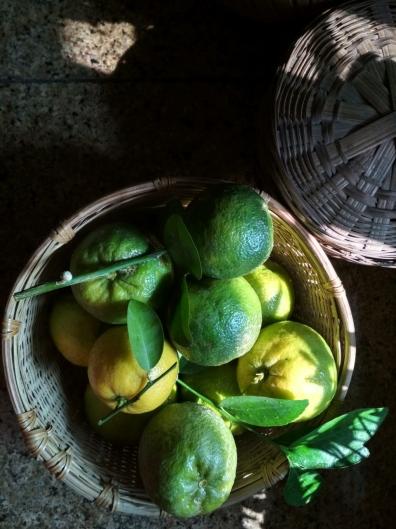 Bitter Limes 2